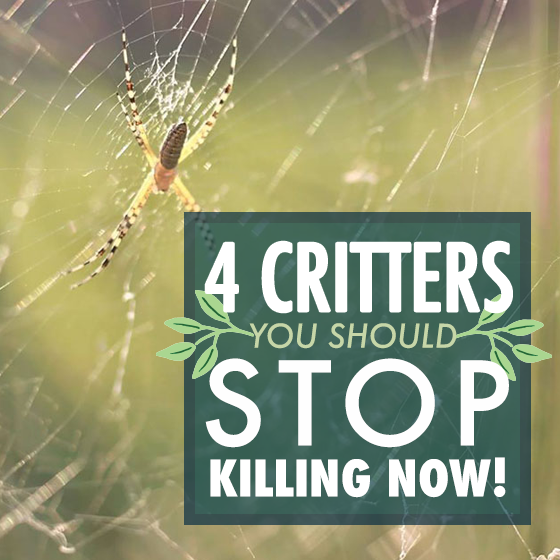 4 Critters You Should Stop Killing Now! 1 Daily Mom Parents Portal