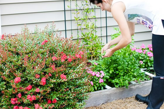 5 Tips for Landscaping on the Cheap 6 Daily Mom Parents Portal