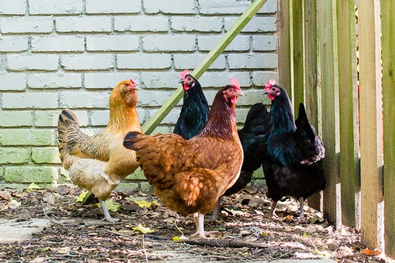 A Beginner's Guide to Homesteading 19 Daily Mom Parents Portal