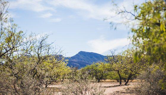 5 Days in Southwestern Arizona 10 Daily Mom Parents Portal