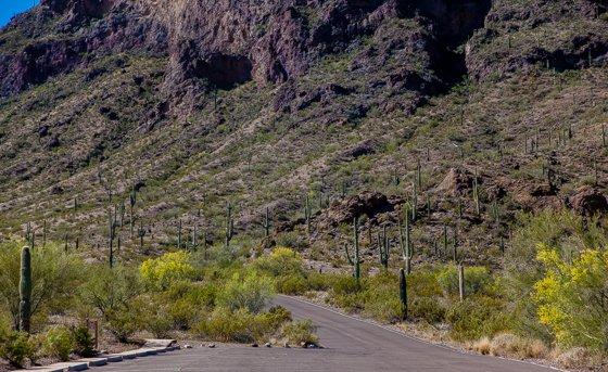 Picacho Peak State Park (4)