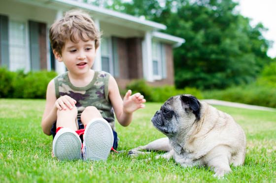 Helping Kids Understand the Death of a Pet 1 Daily Mom Parents Portal