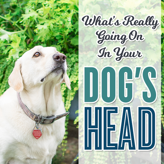 What's Really Going On In Your Dog's Head? 3 Daily Mom Parents Portal