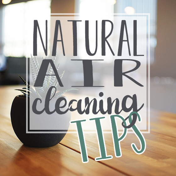 Natural Air Cleaning Tips 9 Daily Mom Parents Portal