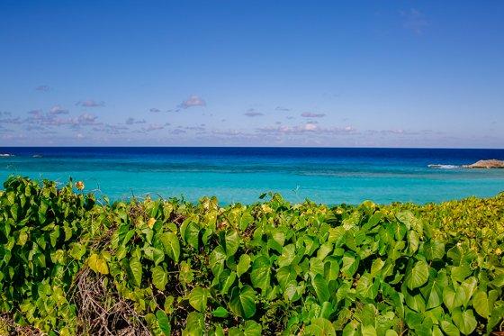 Escape the Winter Blues at Ocean Club Resorts: Turks & Caicos 4 Daily Mom Parents Portal