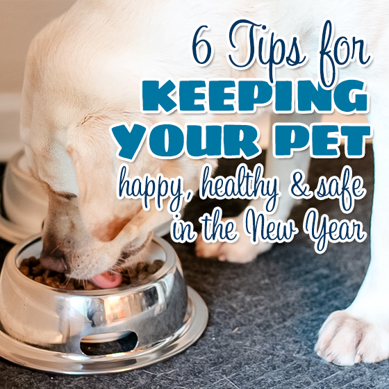6 tips for keeping your pet happy, healthy and safe in the New Year 11 Daily Mom Parents Portal