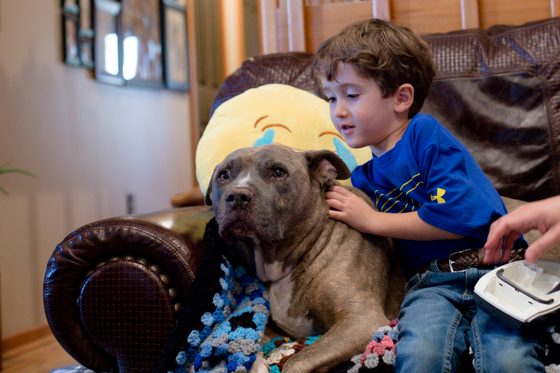 6 tips for keeping your pet happy, healthy and safe in the New Year 8 Daily Mom Parents Portal