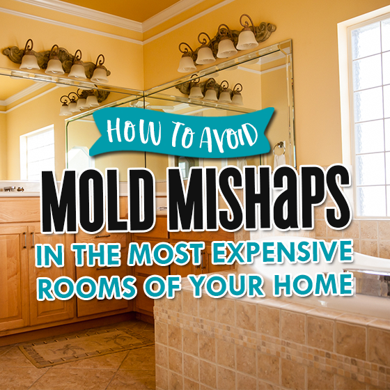 How to Avoid Mold Mishaps in the Most Expensive Rooms of Your Home 5 Daily Mom Parents Portal