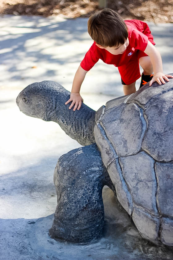 Responsible Reptile Ownership for Kids 1 Daily Mom Parents Portal