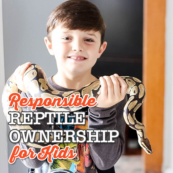 Responsible Reptile Ownership for Kids 14 Daily Mom Parents Portal