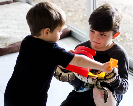 Responsible Reptile Ownership for Kids 11 Daily Mom Parents Portal