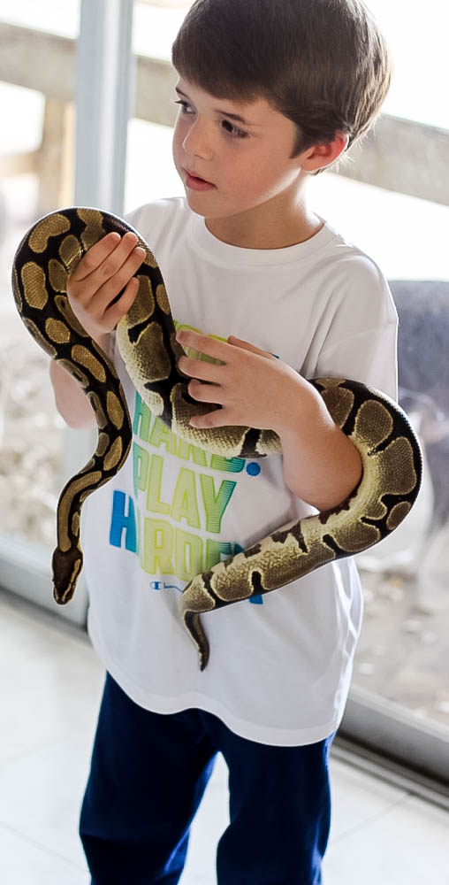 Responsible Reptile Ownership for Kids 13 Daily Mom Parents Portal