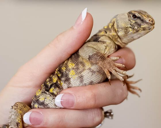 Responsible Reptile Ownership for Kids 9 Daily Mom Parents Portal