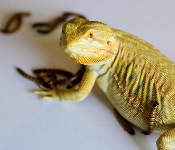 Responsible Reptile Ownership for Kids 7 Daily Mom Parents Portal