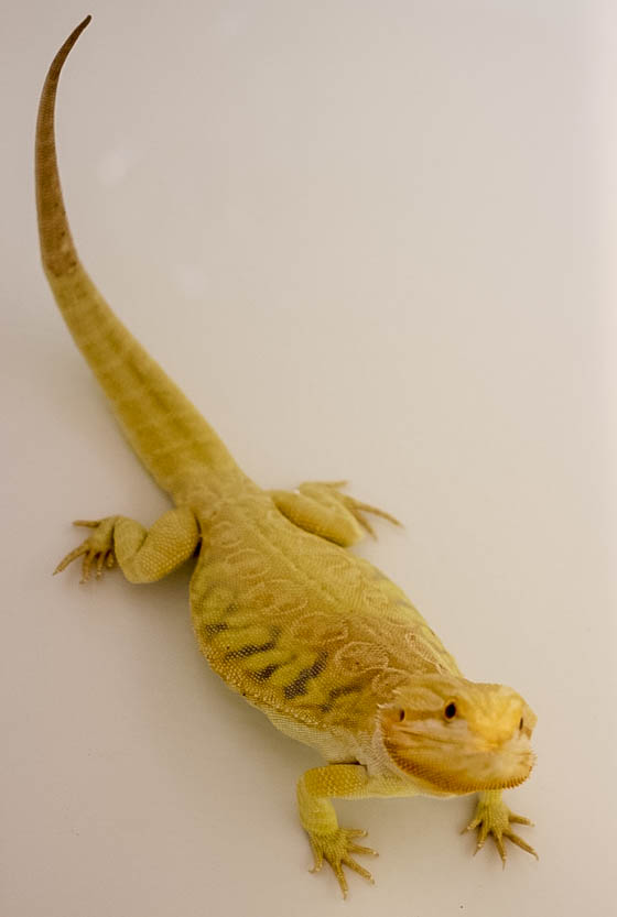 Responsible Reptile Ownership for Kids 10 Daily Mom Parents Portal