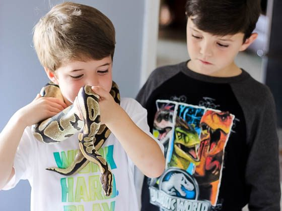 Responsible Reptile Ownership for Kids 5 Daily Mom Parents Portal
