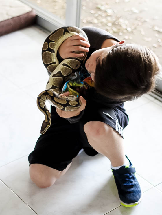 Responsible Reptile Ownership for Kids 2 Daily Mom Parents Portal