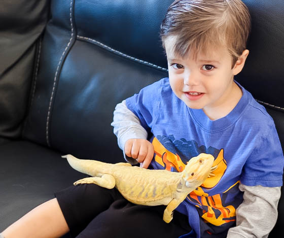 Responsible Reptile Ownership for Kids 12 Daily Mom Parents Portal