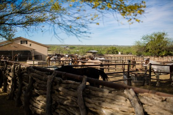 Spring Breakin' Arizona Style at Tanque Verde Ranch 3 Daily Mom Parents Portal