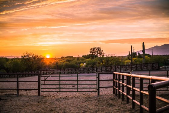 Spring Breakin' Arizona Style at Tanque Verde Ranch 7 Daily Mom Parents Portal