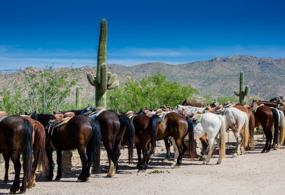 Spring Breakin' Arizona Style at Tanque Verde Ranch 19 Daily Mom Parents Portal