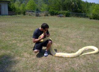 Responsible Reptile Ownership For Kids