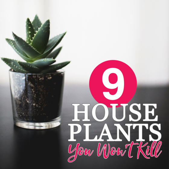 9 House Plants You Won't Kill 10 Daily Mom Parents Portal