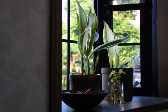 9 House Plants You Won't Kill 9 Daily Mom Parents Portal