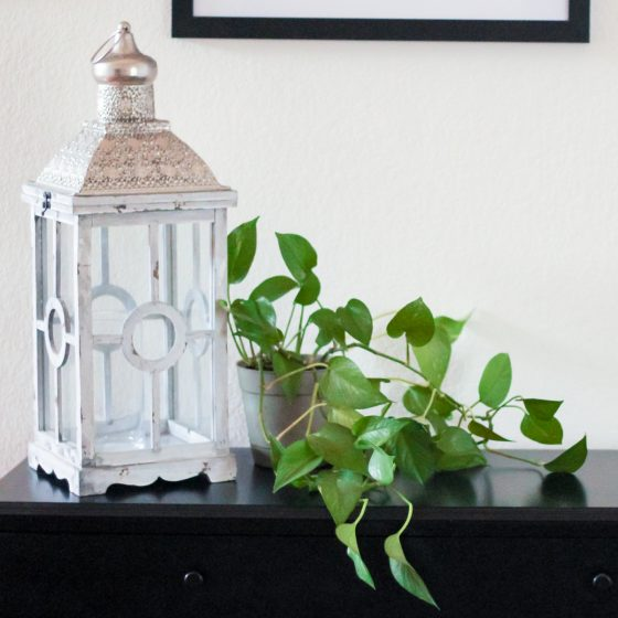 9 House Plants You Won't Kill 6 Daily Mom Parents Portal