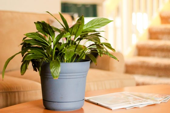 9 House Plants You Won't Kill 1 Daily Mom Parents Portal