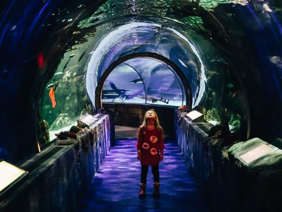 10 Attractions for Families at the Mall of America 35 Daily Mom Parents Portal