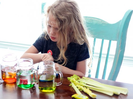 Exploring the World With Science: The Basis of Our Food Chains 7 Daily Mom Parents Portal