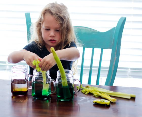 Exploring the World With Science: The Basis of Our Food Chains 4 Daily Mom Parents Portal