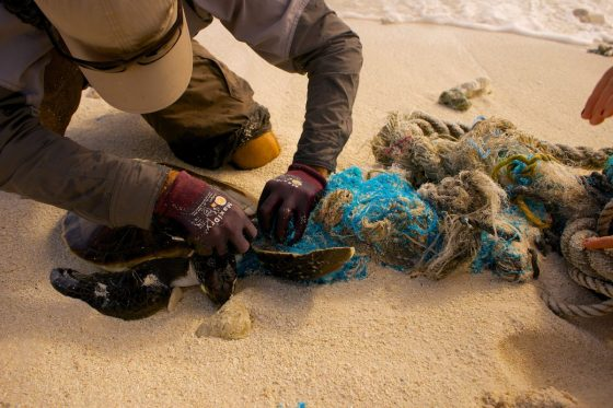 Plastic Oceans: The Epidemic That is Ruining Our Oceans 6 Daily Mom Parents Portal
