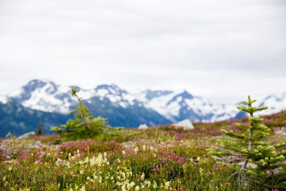 Gifting Unforgettable Experiences in Whistler BC 9 Daily Mom Parents Portal