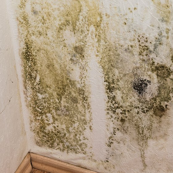 Mold in Your Home? What You Need to Know 1 Daily Mom Parents Portal