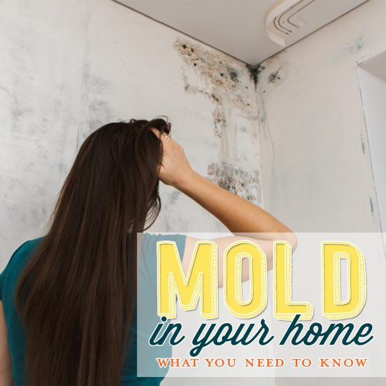 Mold in Your Home? What You Need to Know 4 Daily Mom Parents Portal