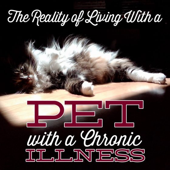 THE REALITY OF LIVING WITH A PET WITH A CHRONIC ILLNESS 1 Daily Mom Parents Portal