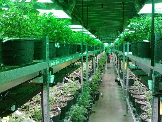 Legalization of Medical Marijuana and Parenting 4 Daily Mom Parents Portal