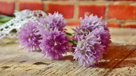 10 Edible Flowers and Recipes You Can Try 4 Daily Mom Parents Portal