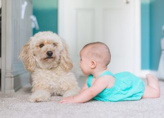 9 Activities To Enjoy With Your Baby And Dog