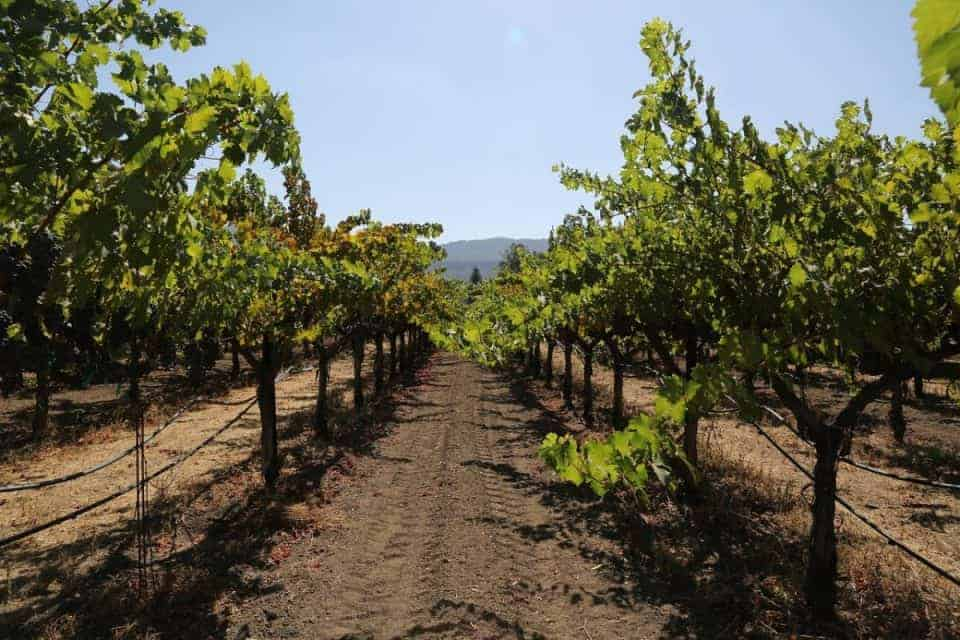 Picking the Right Cabernet Sauvignon For You 3 Daily Mom Parents Portal