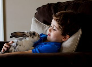 Owning A Bunny Beyond Easter