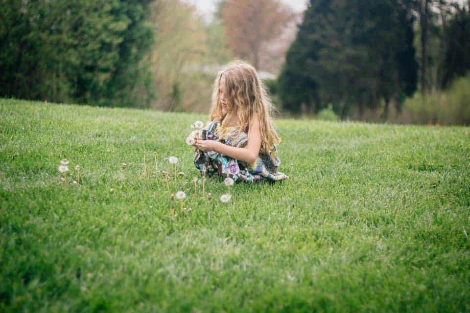 4H Wildflower