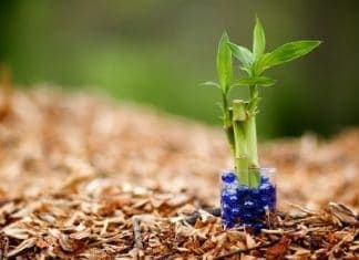 9 House Plants You Won't Kill