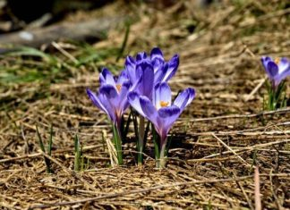 Best Bulbs For Fall Planting