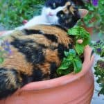 Houseplant Safety For Pets
