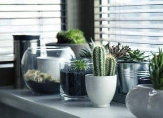 Natural Air Cleaning Tips