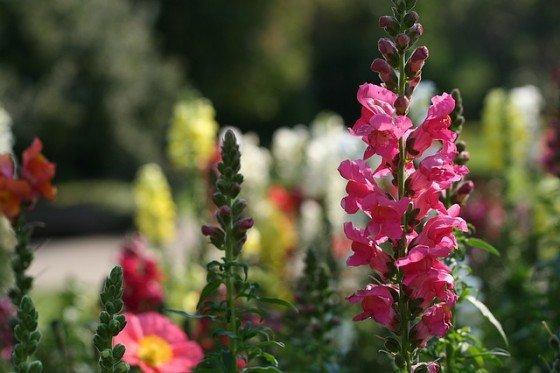 The Best Flowers For Spring Gardens