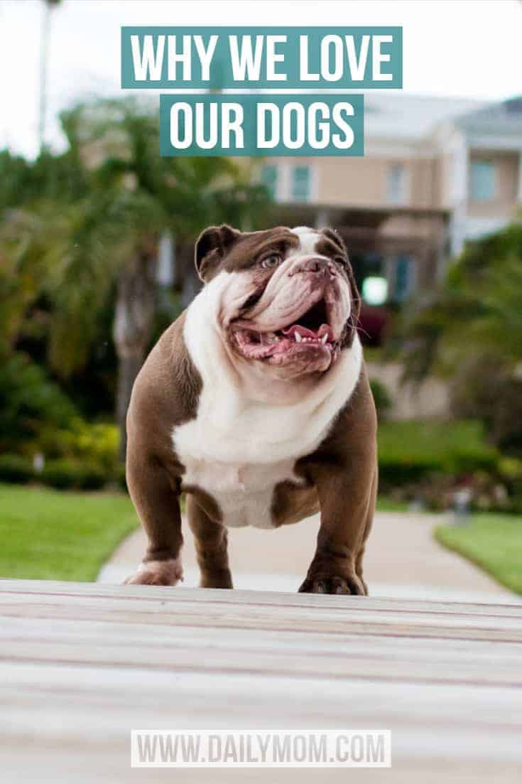 Why we love our dogs